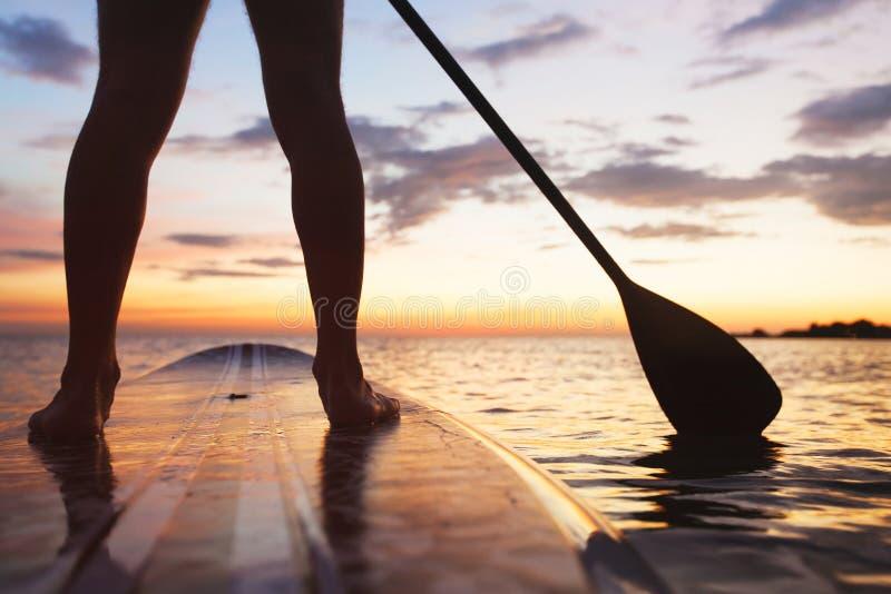 Γουλιά, στάση επάνω στον πίνακα κουπιών στη θάλασσα στοκ φωτογραφία με δικαίωμα ελεύθερης χρήσης