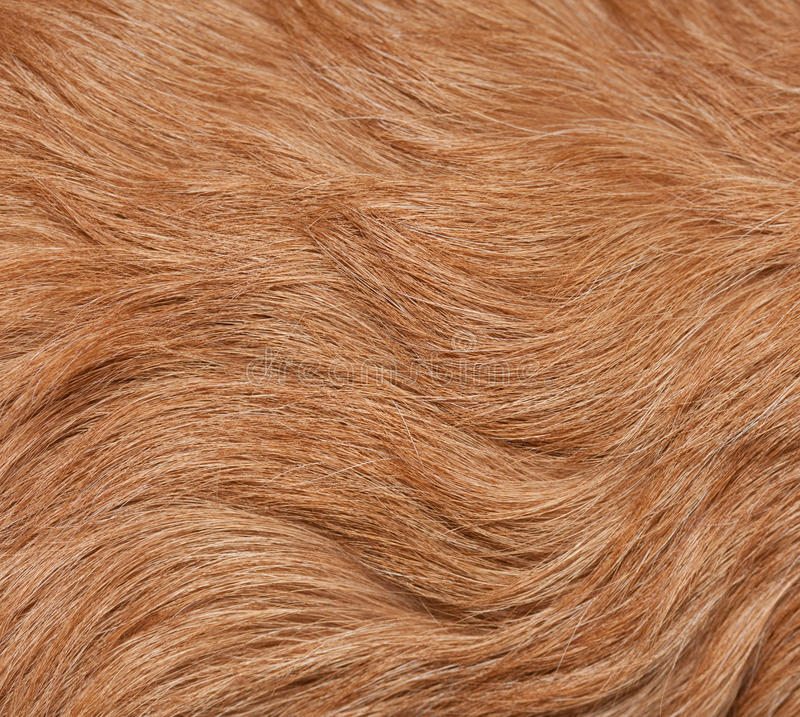 γούνα σκυλιών στοκ εικόνα με δικαίωμα ελεύθερης χρήσης