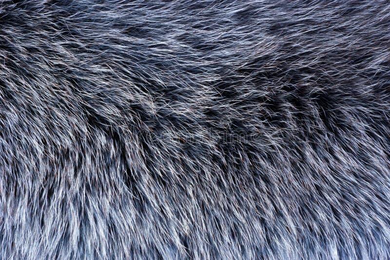 Γούνα της γούνα-συμπεριφοράς των ζώων — μαυρισμένα δέρματα με το μαλλί Γούνα — η μαστοφόρος τρίχα, προστατεύει από το χειμώνα του στοκ εικόνες με δικαίωμα ελεύθερης χρήσης