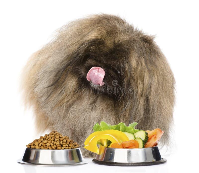 Γούνινη συνεδρίαση σκυλιών με κύπελλα των ξηρών τροφίμων και των λαχανικών γατών απομονωμένος στοκ φωτογραφία με δικαίωμα ελεύθερης χρήσης