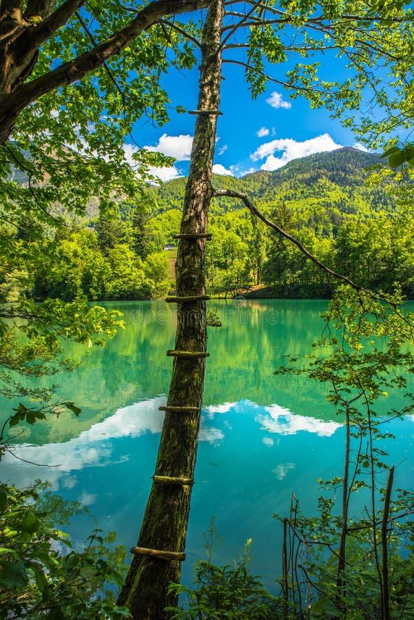 Γούρνα το δάσος στη λίμνη στοκ εικόνα με δικαίωμα ελεύθερης χρήσης