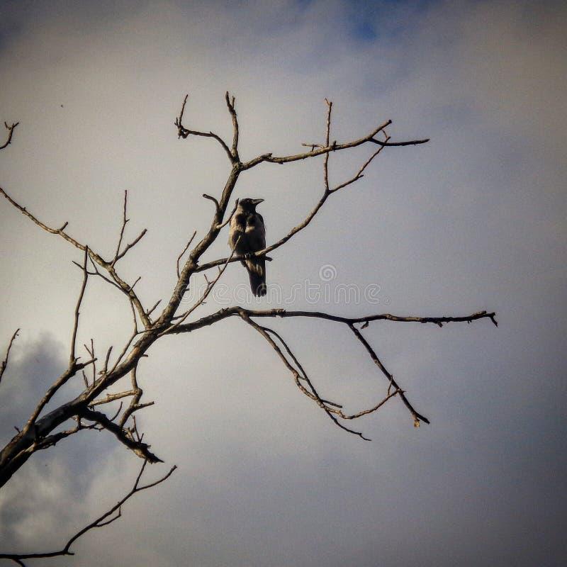 Γράμμα Τ πουλιών στοκ εικόνες