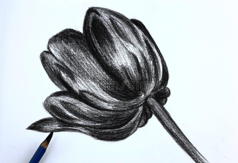 Γράφω το σχέδιο των λουλουδιών με μολύβι στοκ εικόνες