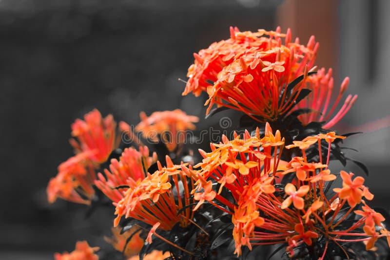 Γράψτε το λουλούδι Μπαλί χρώματος στοκ εικόνα