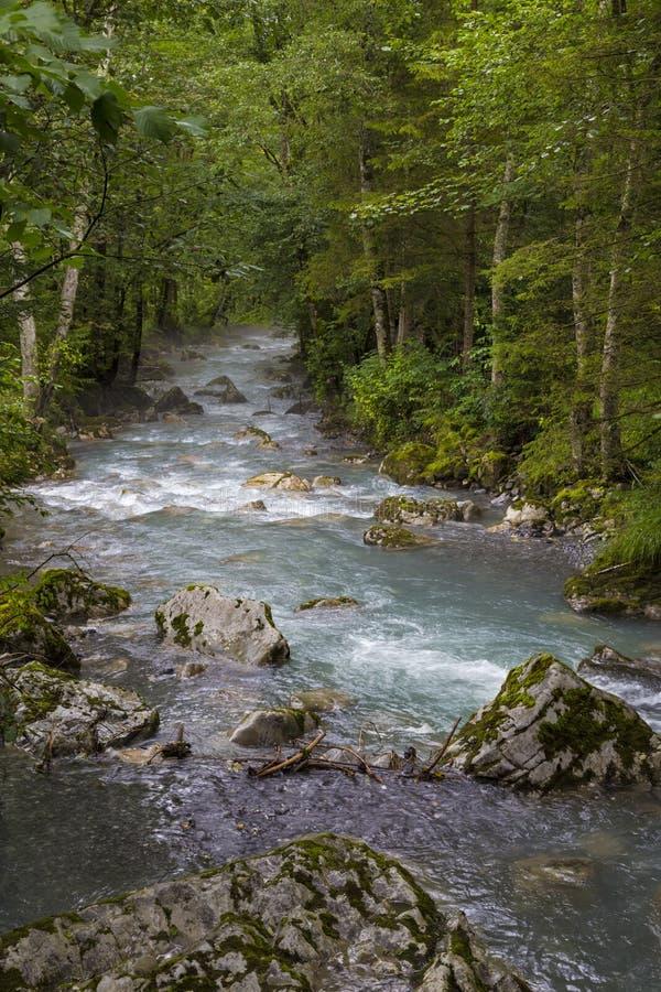 Γρήγορος ποταμός βουνών και πράσινο δάσος στοκ εικόνα