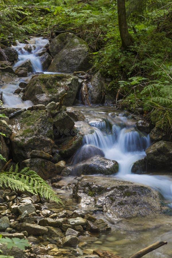Γρήγορος ποταμός βουνών που ρέει μεταξύ των mossy πετρών στοκ εικόνα με δικαίωμα ελεύθερης χρήσης