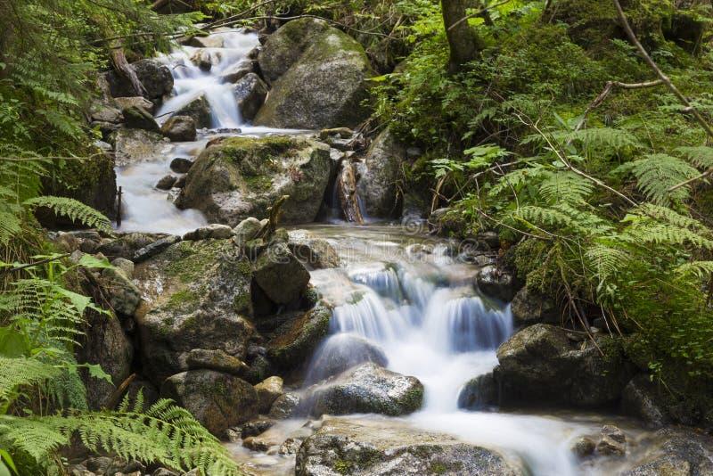 Γρήγορος ποταμός βουνών που ρέει μεταξύ των mossy πετρών στοκ φωτογραφία με δικαίωμα ελεύθερης χρήσης