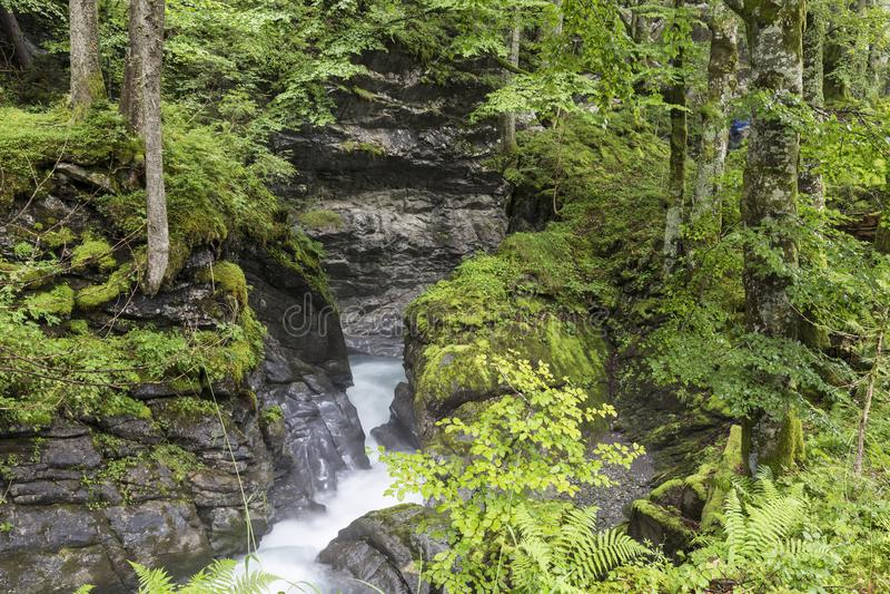 Γρήγορος ποταμός βουνών στο φαράγγι στοκ εικόνες