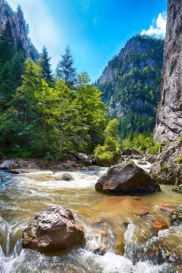 Γρήγορος ποταμός βουνών στο φαράγγι Bicaz/Cheile Bicazului στοκ φωτογραφία