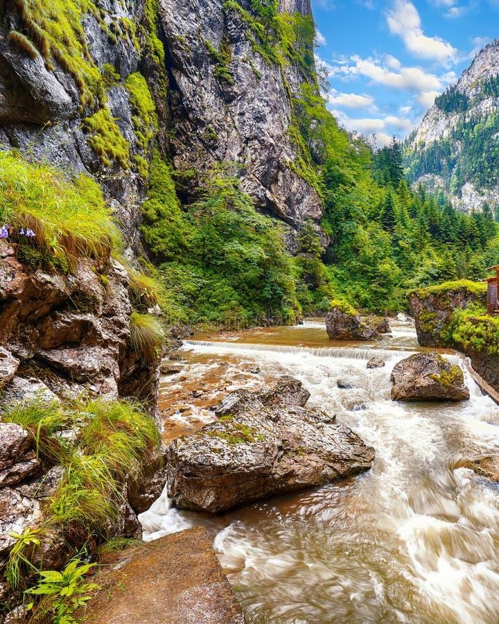 Γρήγορος ποταμός βουνών στο φαράγγι Bicaz/Cheile Bicazului στοκ φωτογραφία με δικαίωμα ελεύθερης χρήσης