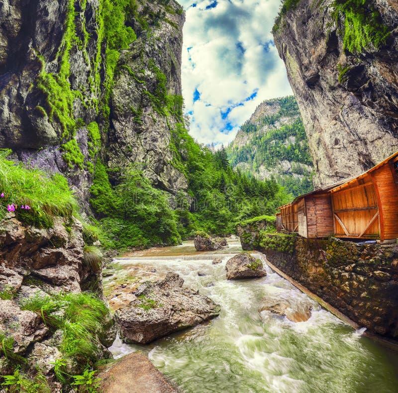 Γρήγορος ποταμός βουνών στο φαράγγι Bicaz/Cheile Bicazului στοκ εικόνες