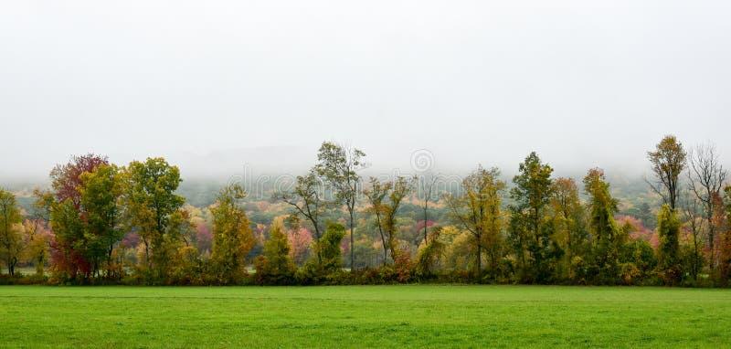 Γραμμή δέντρων το πρόωρο φθινόπωρο με την ομίχλη στοκ εικόνα