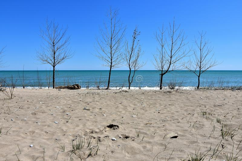 Γραμμή δέντρων λευκών κοντά στην ακτή στοκ φωτογραφία με δικαίωμα ελεύθερης χρήσης