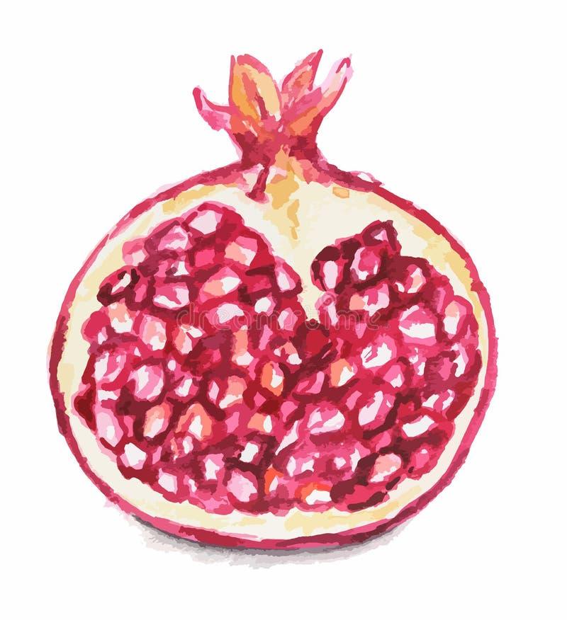 γρανάτης watercolor διανυσματική απεικόνιση