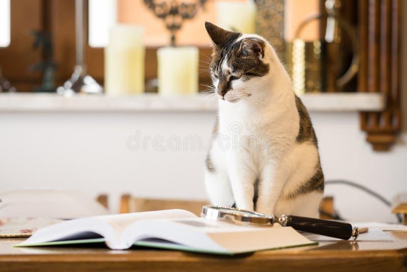 Γραπτή γάτα δίπλα σε ένα βιβλίο στοκ φωτογραφία με δικαίωμα ελεύθερης χρήσης