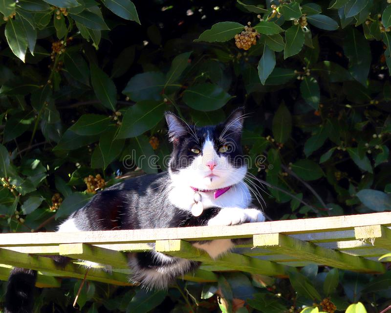 Γραπτή γάτα ηλιόλουστο trellis στοκ εικόνες με δικαίωμα ελεύθερης χρήσης