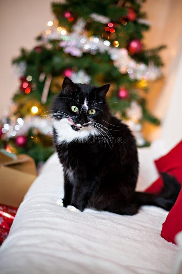 Γραπτή γάτα μπροστά από το χριστουγεννιάτικο δέντρο στοκ εικόνες