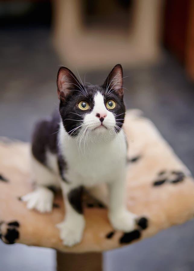 Γραπτή γάτα στοκ εικόνες με δικαίωμα ελεύθερης χρήσης
