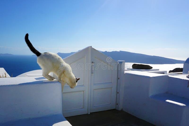 Γραπτή γάτα Oia, Santorini στοκ φωτογραφία με δικαίωμα ελεύθερης χρήσης