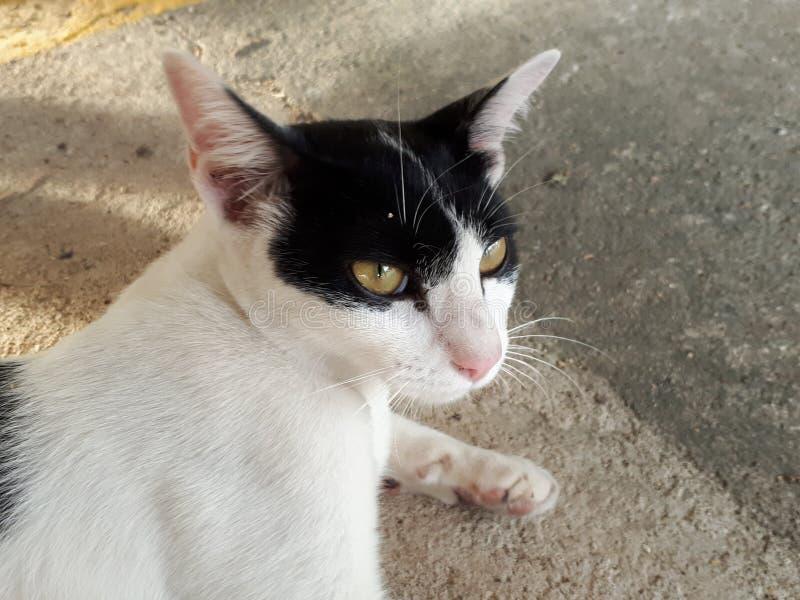 Γραπτή γάτα στοκ εικόνα