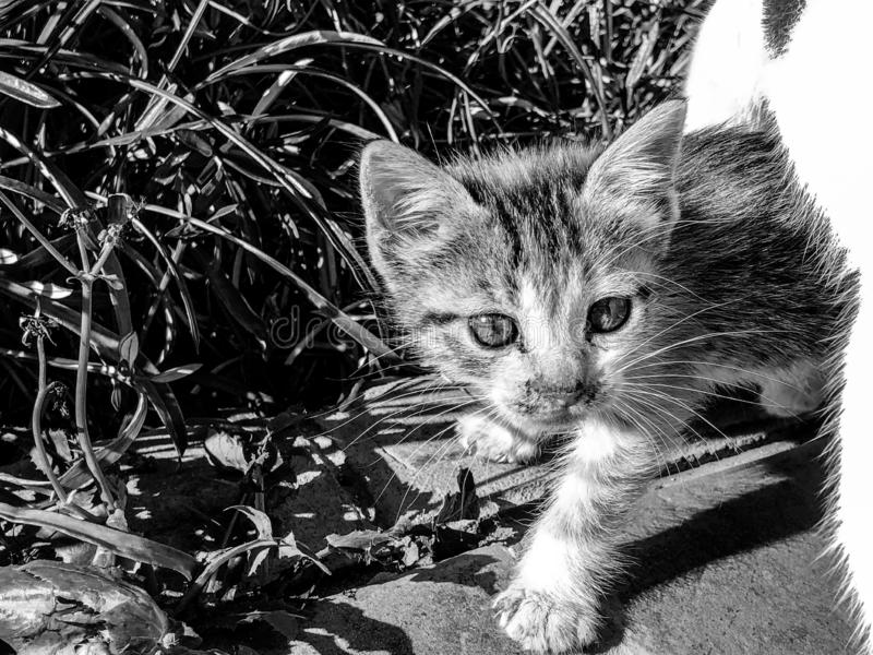 Γραπτή εικόνα ενός περίεργου γατακιού ταρταρουγών στοκ φωτογραφία με δικαίωμα ελεύθερης χρήσης