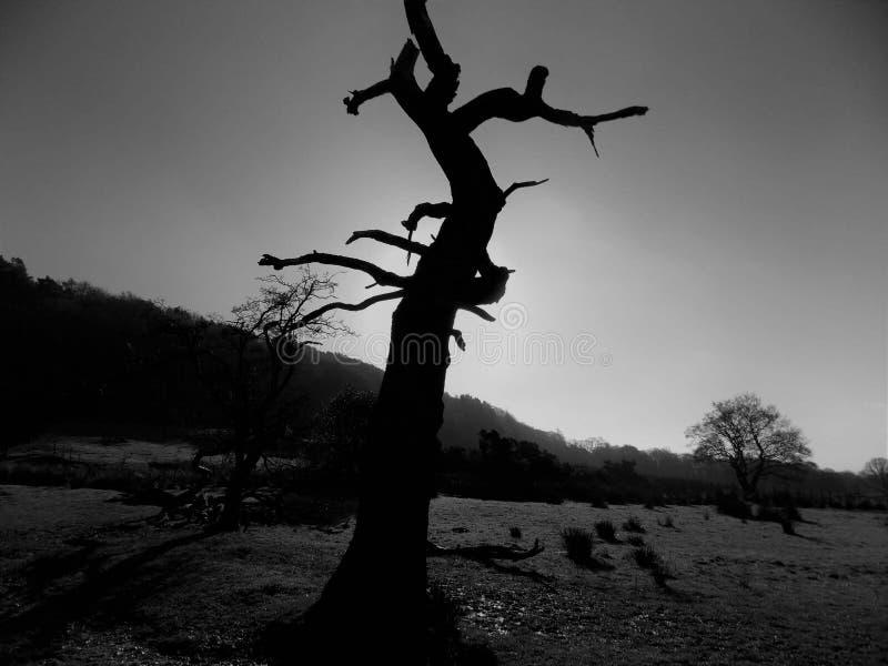 Γραπτή σκιαγραφία δέντρων στοκ φωτογραφία με δικαίωμα ελεύθερης χρήσης