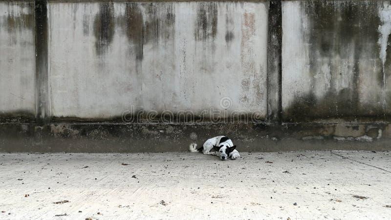 Γραπτή ταϊλανδική να βρεθεί σκυλιών οδός στοκ φωτογραφία με δικαίωμα ελεύθερης χρήσης