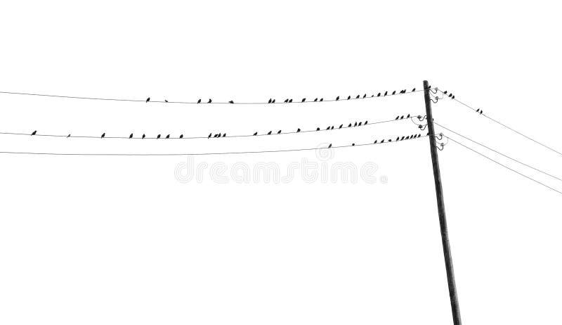 Γραπτή τονισμένη εικόνα με πολλά πουλιά στα καλώδια στοκ εικόνες