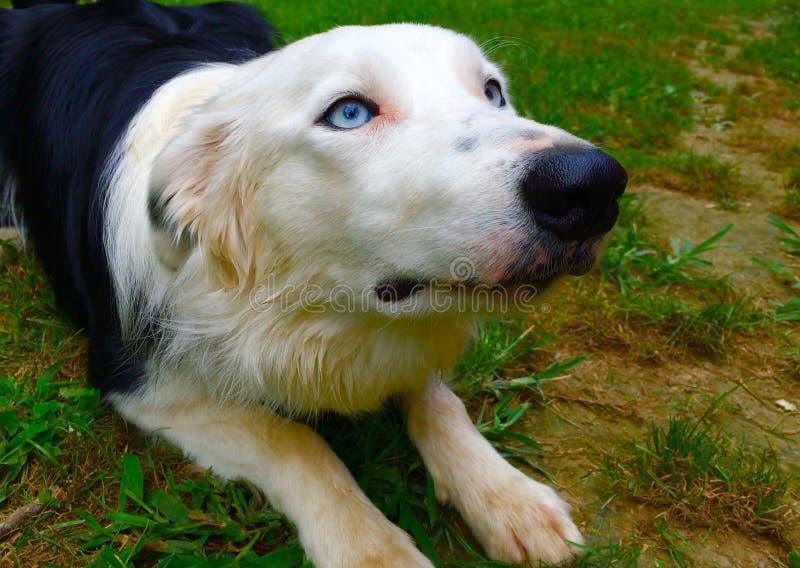 Γραπτή τοποθέτηση σκυλιών στοκ φωτογραφίες με δικαίωμα ελεύθερης χρήσης