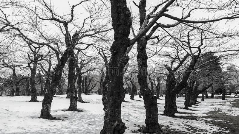 Γραπτή φωτογραφία των ξηρών δέντρων και των κλάδων στο ξύλινο πνεύμα στοκ φωτογραφία