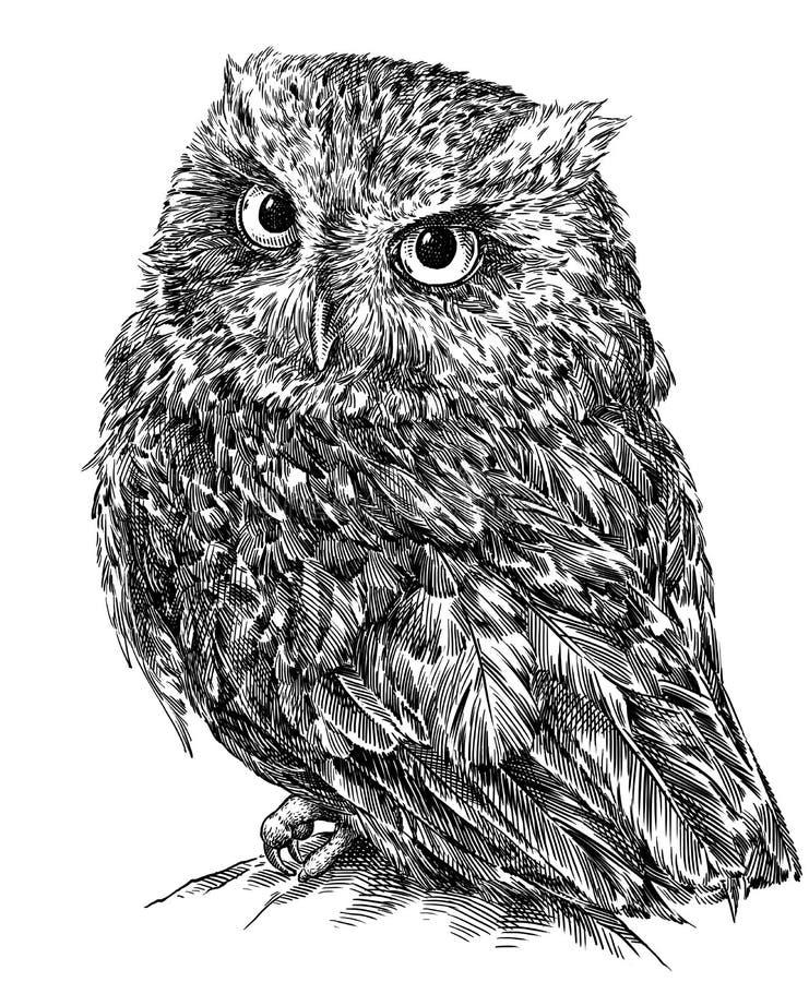 Γραπτός χαράξτε την απομονωμένη απεικόνιση κουκουβαγιών απεικόνιση αποθεμάτων