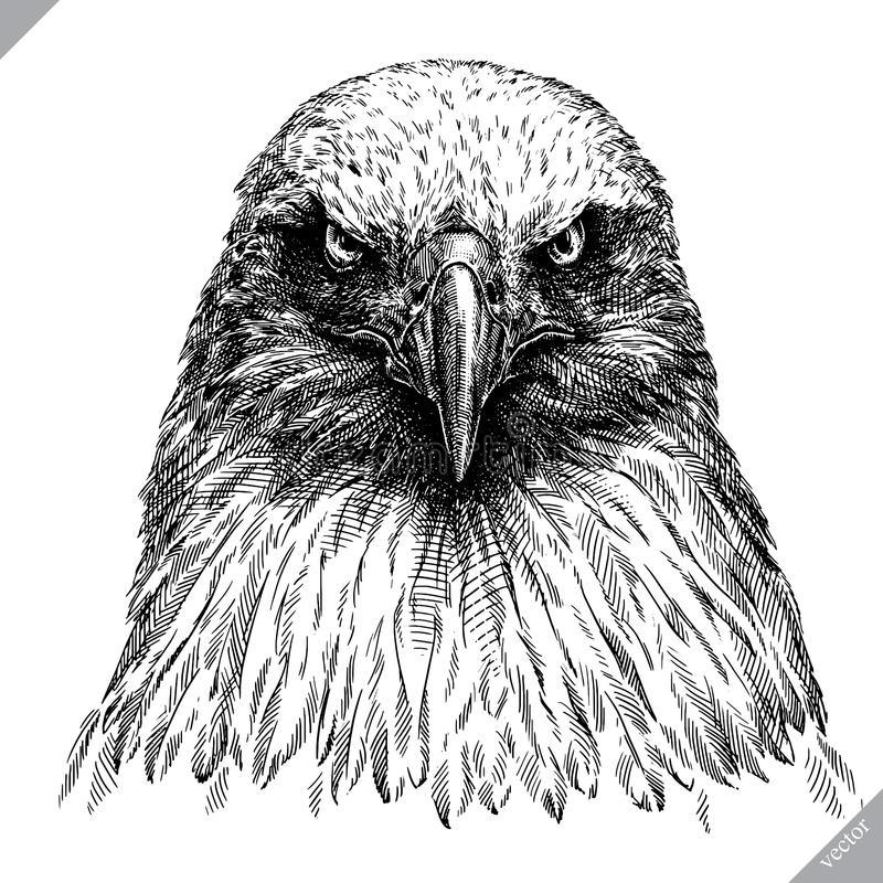 Γραπτός χαράξτε την απομονωμένη διανυσματική απεικόνιση αετών απεικόνιση αποθεμάτων