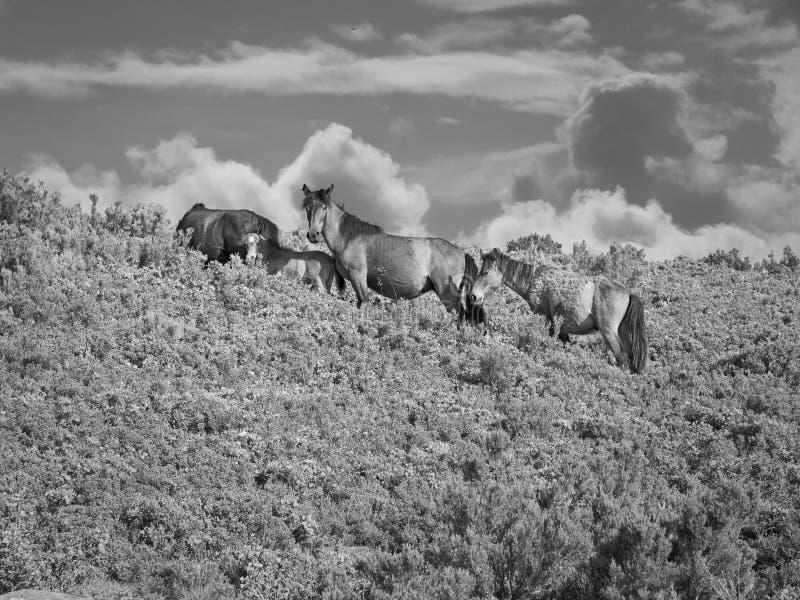 Γραπτό άγριο κοπάδι αλόγων στοκ φωτογραφίες