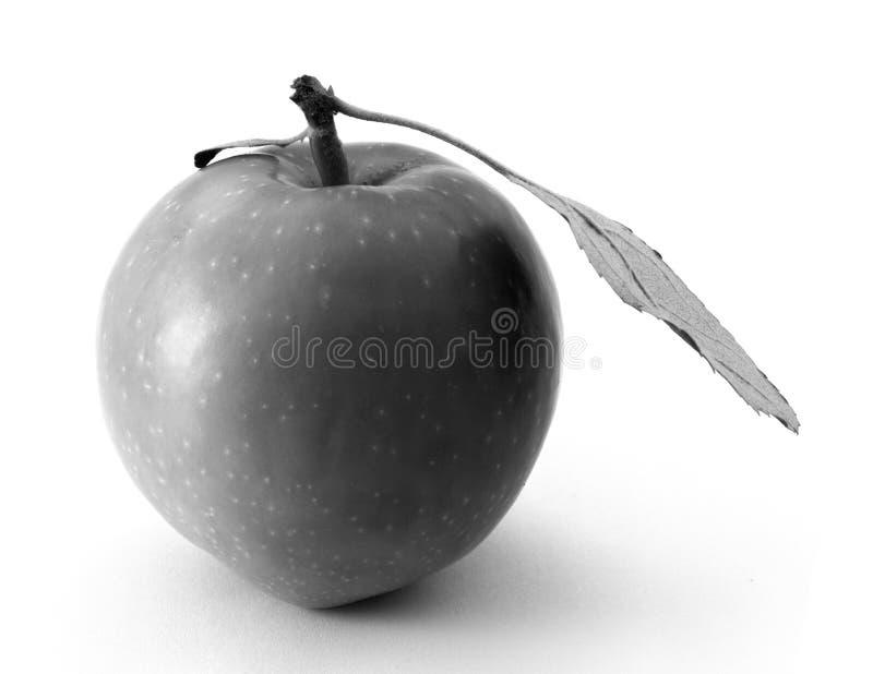 Γραπτό ενιαίο μήλο με ένα μεγάλο φύλλο που απομονώνεται στο άσπρο υπόβαθρο στοκ φωτογραφία με δικαίωμα ελεύθερης χρήσης