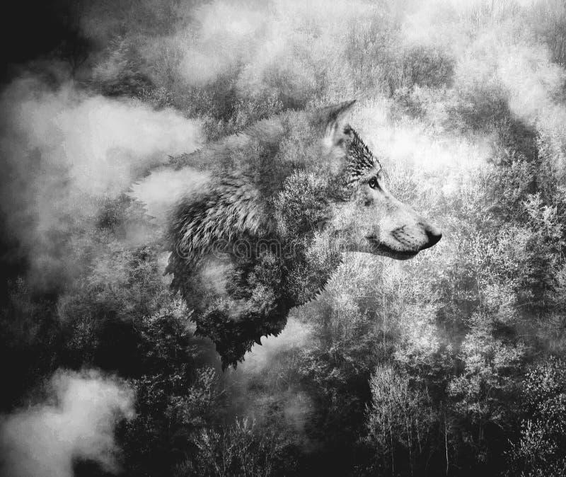 Γραπτό κολάζ: Κεφάλι λύκων και το δάσος της Misty στοκ εικόνες