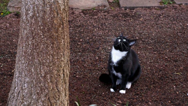 Γραπτό κυνήγι γατών κάτω από το δέντρο στον κήπο στοκ εικόνες με δικαίωμα ελεύθερης χρήσης