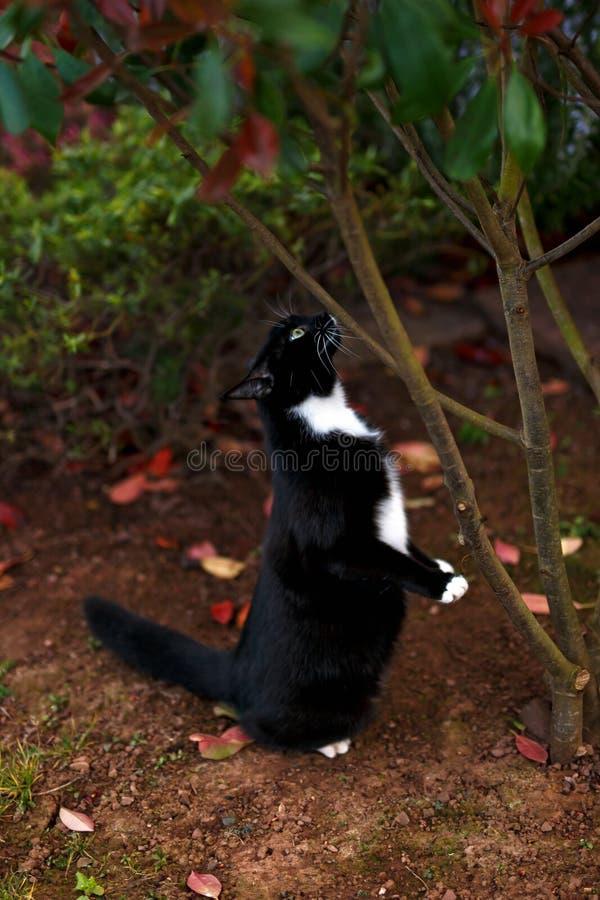 Γραπτό κυνήγι γατών κάτω από το δέντρο στον κήπο στοκ φωτογραφίες με δικαίωμα ελεύθερης χρήσης