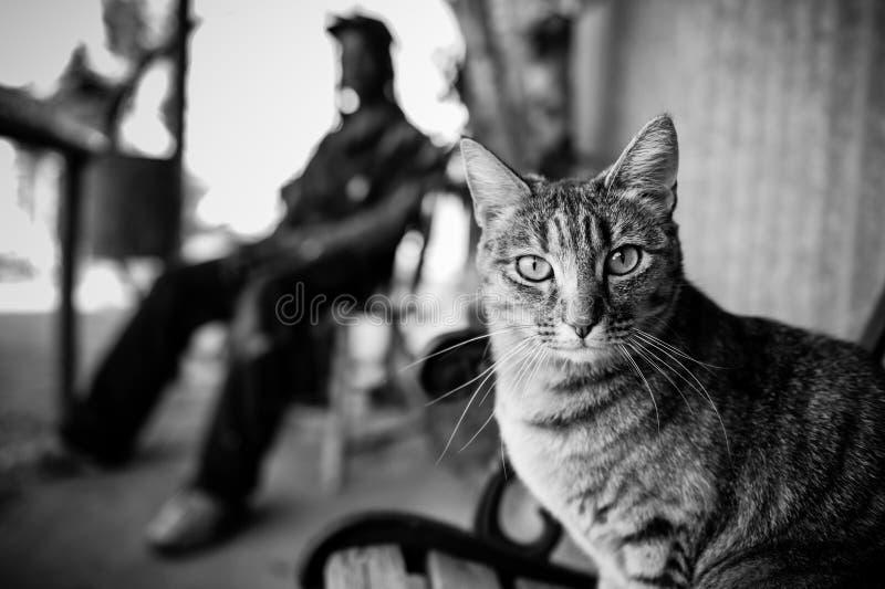 Γραπτό πορτρέτο μιας γάτας κοίταγμα γατών φωτογραφι& στοκ εικόνες