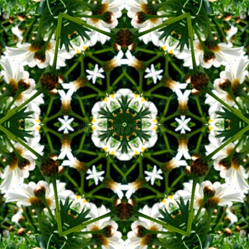 Γραφικά στοιχεία φιαγμένα από εικόνα λουλουδιών μαργαριτών στοκ εικόνες