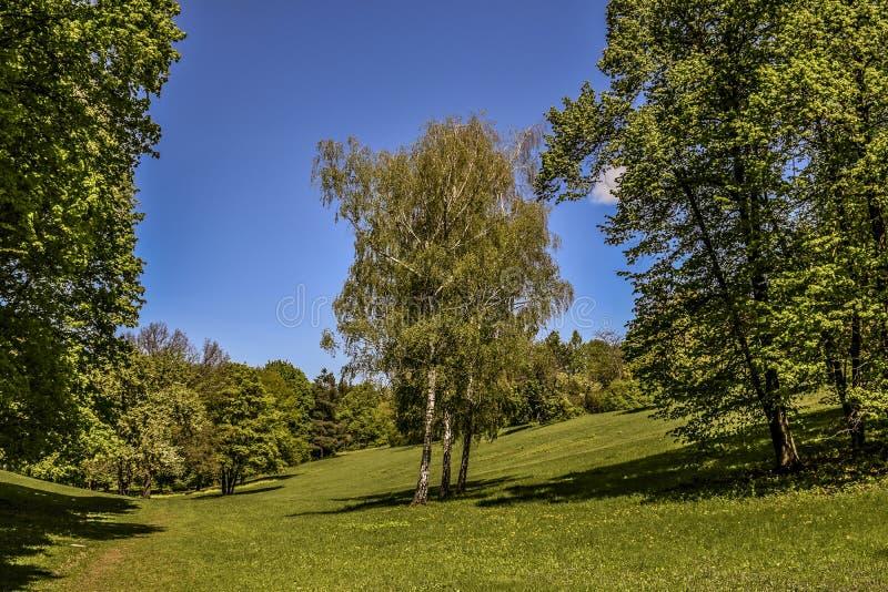 Γραφικά τοπία στο dendrological πάρκο στοκ φωτογραφία με δικαίωμα ελεύθερης χρήσης