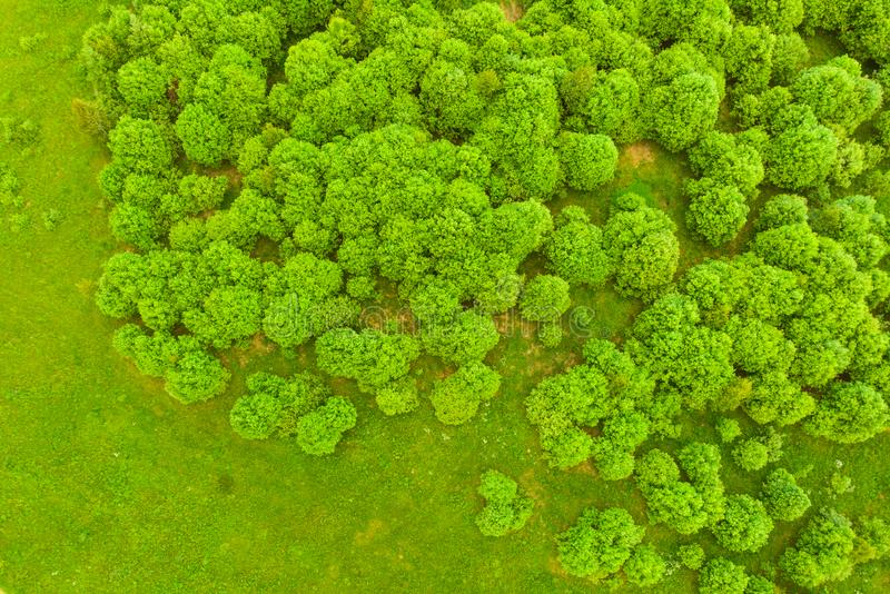 Γραφική εναέρια άποψη του πράσινου δασικού όμορφου φυσικού τοπίου από τον αέρα το καλοκαίρι στοκ φωτογραφίες