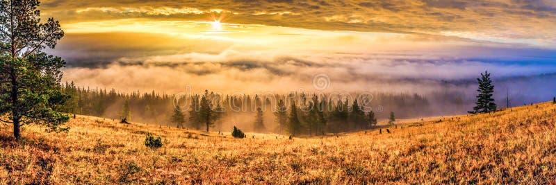 Γραφική πανοραμική εικόνα του Ουράλ τάιγκα την αυγή στοκ φωτογραφίες με δικαίωμα ελεύθερης χρήσης