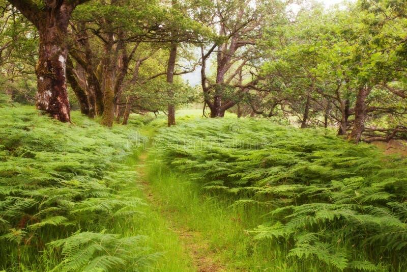 Γραφικός δρόμος στο σκωτσέζικο Χάιλαντς, εθνικό πάρκο Cairngorms, δασόβια σκηνή άνοιξη της Σκωτίας, Ηνωμένο Βασίλειο, Ευρώπη Α στοκ εικόνα