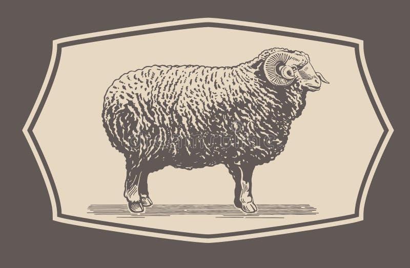 Γραφικός κριός, πρόβατα διανυσματική απεικόνιση