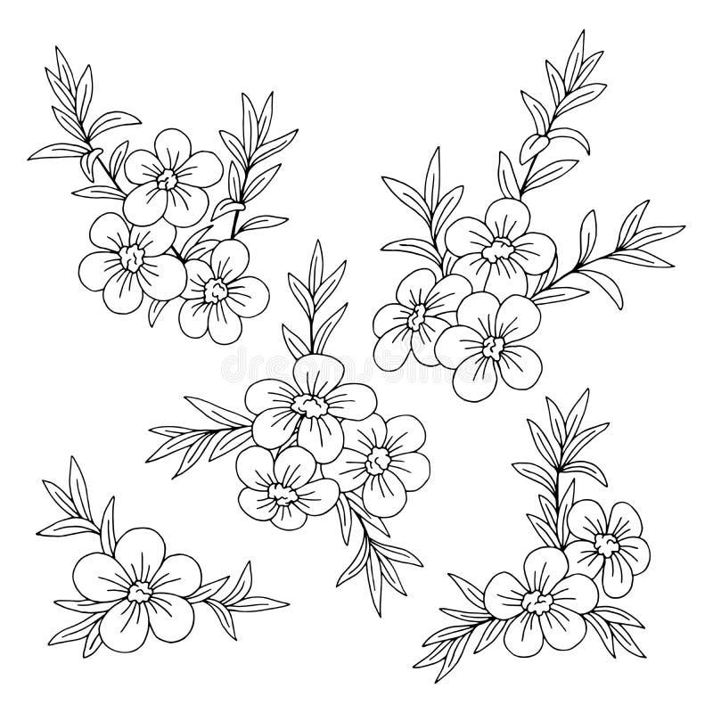 Γραφικό μαύρο απομονωμένο λευκό διάνυσμα απεικόνισης σκίτσων λουλουδιών Manuka απεικόνιση αποθεμάτων