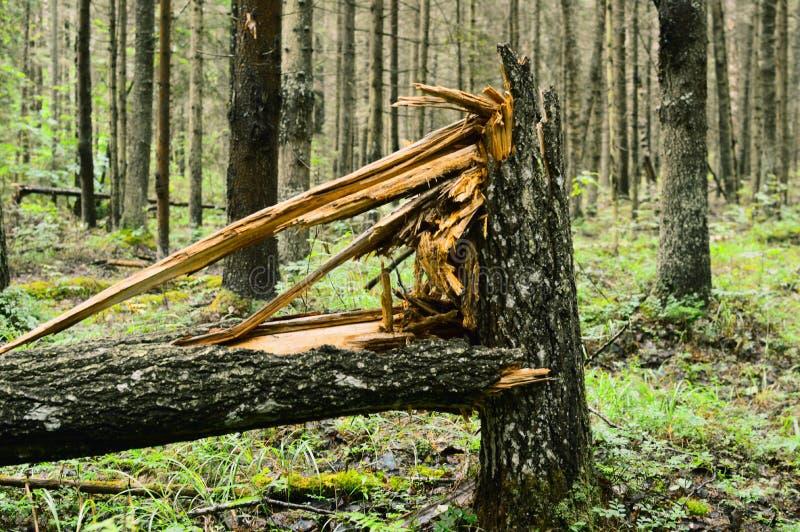 Γραφικό μονοπάτι στο μυστήριο δάσος στοκ φωτογραφίες