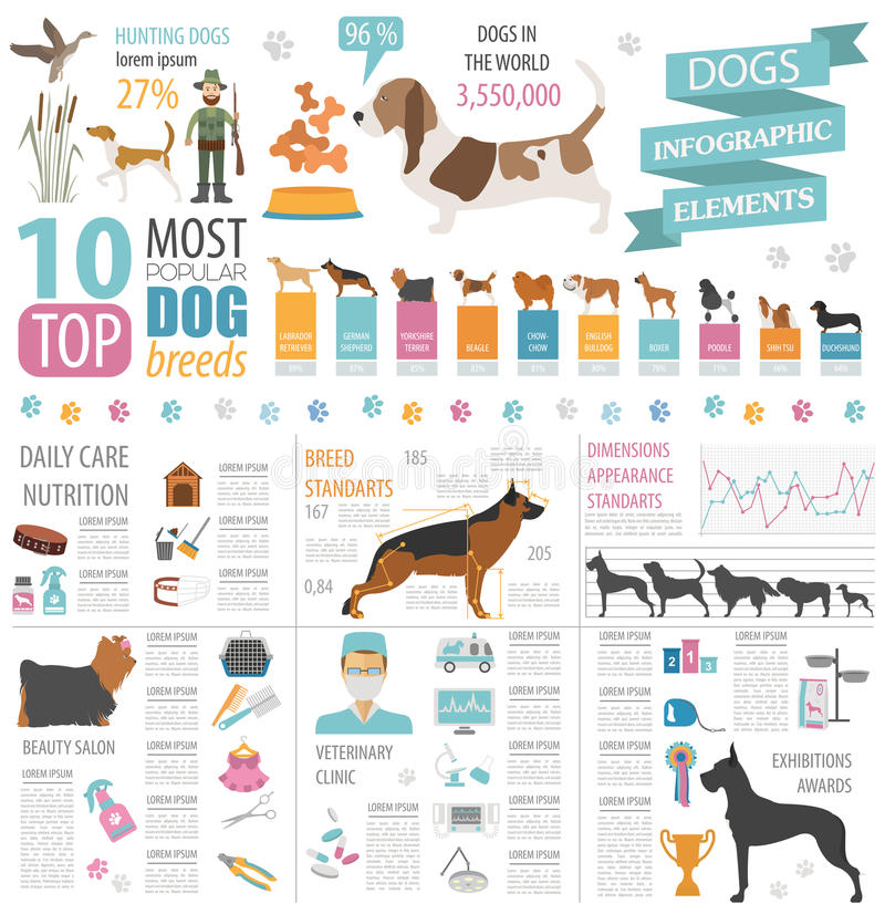Γραφικό πρότυπο πληροφοριών σκυλιών Προσοχή Heatlh, κτηνίατρος, διατροφή, exhibiti ελεύθερη απεικόνιση δικαιώματος