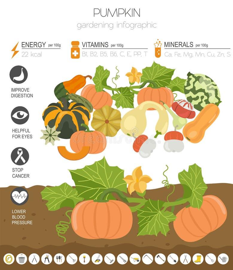 Γραφικό πρότυπο χαρακτηριστικών γνωρισμάτων κολοκύθας ευεργετικό Κηπουρική, καλλιέργεια infographic, πώς αυξάνεται Επίπεδο σχέδιο διανυσματική απεικόνιση