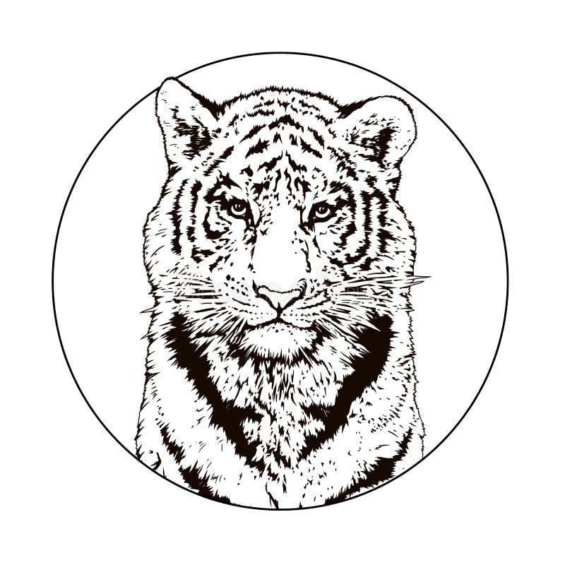 Γραφικό σχέδιο μιας τίγρης της Βεγγάλης wildlife μεγάλη γάτα διανυσματική απεικόνιση