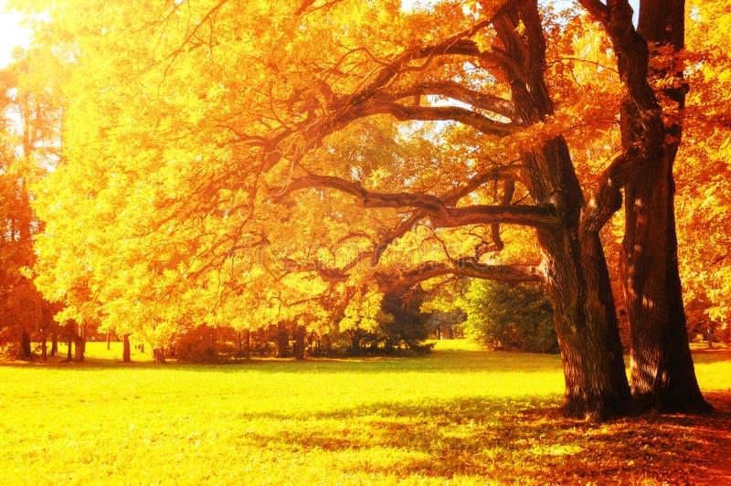 Γραφικό τοπίο πτώσης Δέντρα πτώσης με το κιτρινισμένο φύλλωμα στο ηλιόλουστο πάρκο Οκτωβρίου αναμμένο από την ηλιοφάνεια στοκ φωτογραφίες με δικαίωμα ελεύθερης χρήσης